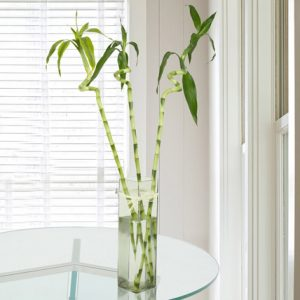 3 Spiral Bamboo Stick In Glass Vase